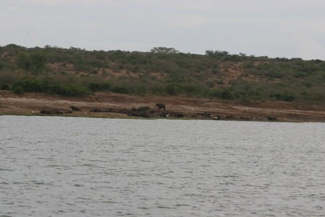 Scenery along the Kazinga Channel