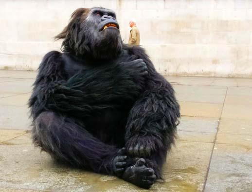 bakwate mountain gorilla