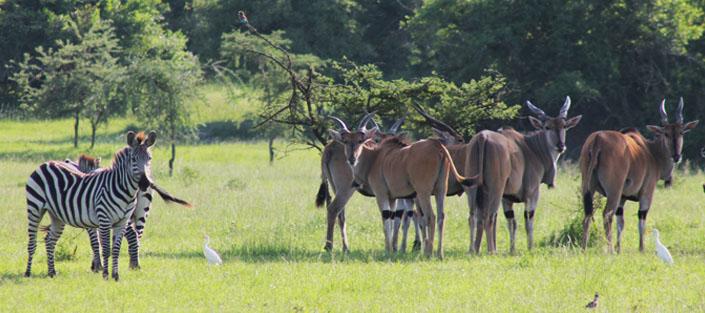 1 Day Lake Mburo national park tour - Wildlife safari