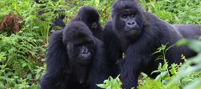 2 Days Gorilla tracking Bwindi