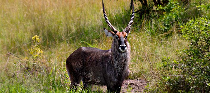 2 Days Akagera National Park Safari for a great wildlife experience.