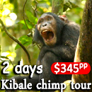 2 days kibale chimp tour