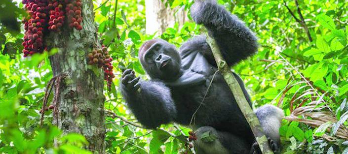 3 Days Gorilla Tracking Bwindi and Lake Bunyonyi safari