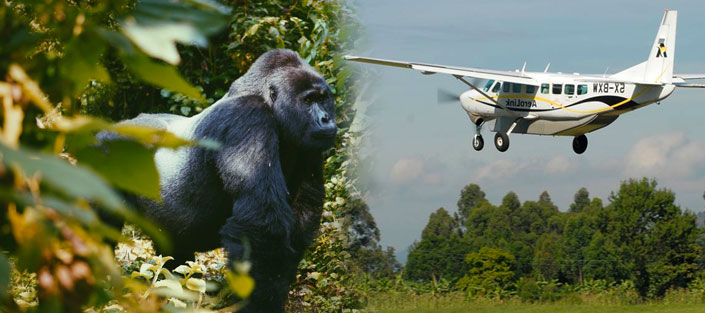 33 Days Luxury Gorilla Flying Safari to the home of Mountain Gorillas