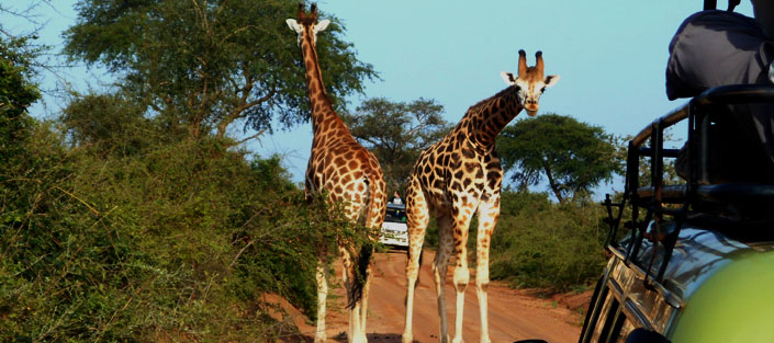 3 days murchison falls safari, Uganda