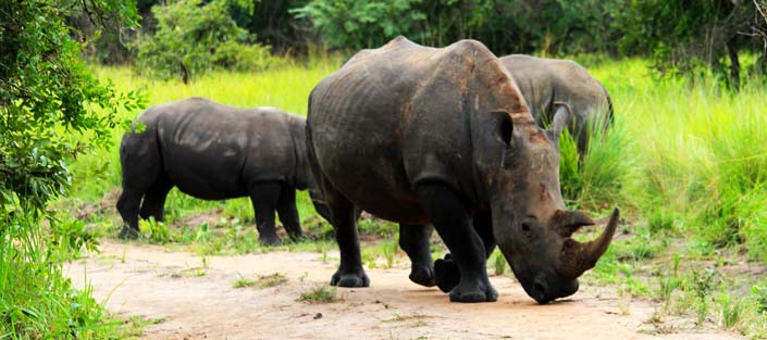 3 Days Murchison Falls safari and Rhino Tracking tour, Ziwa sanctuary