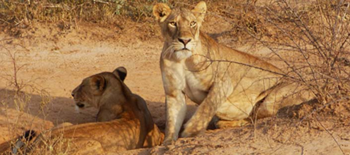 3 Days Lake Mburo and Queen Elizabeth National Parks - Safari Trip