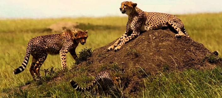 3 Days Samburu National Reserve Safari