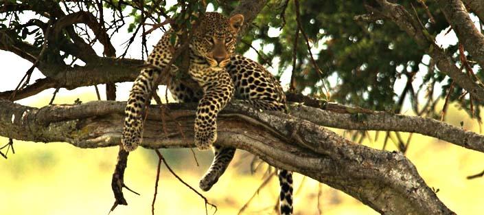 4 Days Kidepo wildlife safari - Roads Safari or Flying Safari Uganda