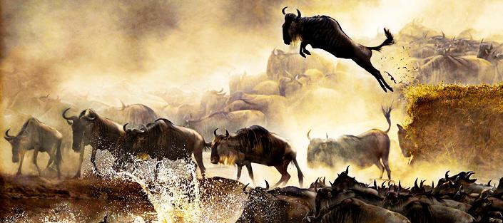 4 Days Masai Mara and Lake Nakuru safari - wildlife and birding tour