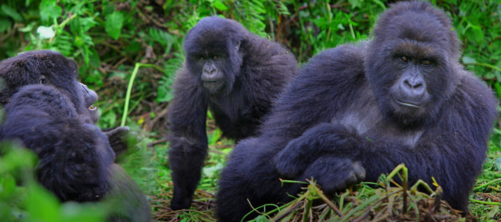 5 Days Gorilla tracking tour, Lake Mburo and Queen Elizabeth Safari