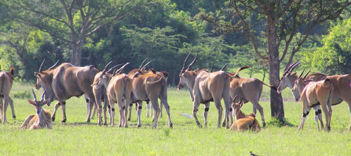 Topis - 5 days lake mburo and Queen Elizabeth safari trip