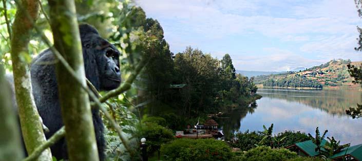 6 Days Gorilla tracking Nkuringo, Lake Mburo, Lake Bunyonyi and Mgahinga hike safari