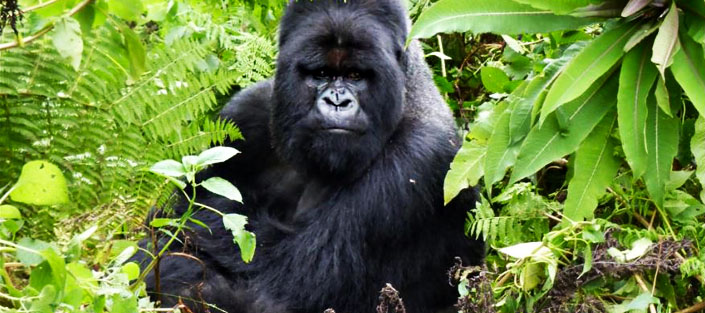 6 Days Gorillas and Wildlife tour in Rwanda with a visit to Akagera