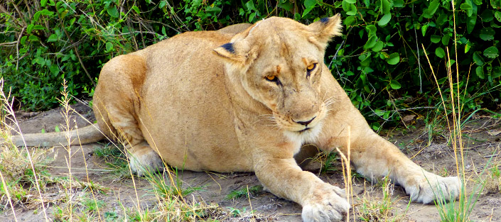 6 Days Queen Elizabeth and Murchison falls tour safari in Uganda