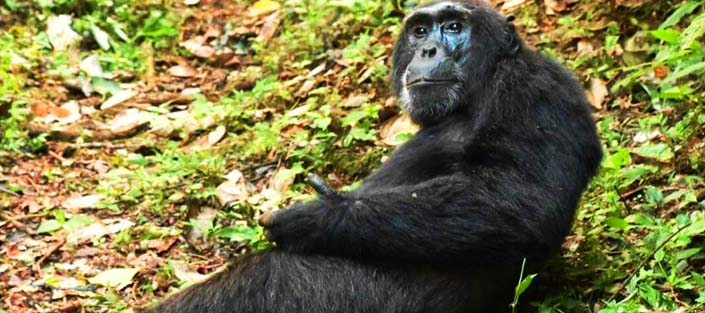 6 days wildlife and Chimpanzee tour - Murchison Falls, Kibale Forest and Queen Elizabeth national parks