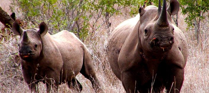 8 Days Kenya wildlife safari through top destinations in Kenya