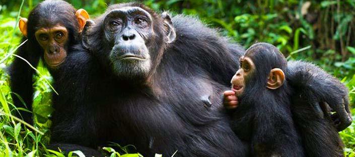 8 Days Uganda tour, primates and wildlife safari - Top destinations