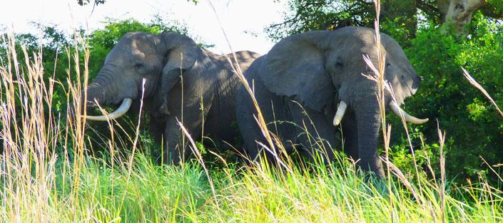 3 Days Big Five safari Uganda to see lions, leopards, elephants, rhinos and buffaloes