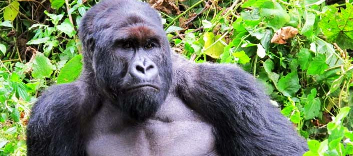 Virunga National Park - Parc National Des Virunga