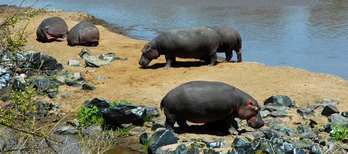 Masai Mara National Wildlife Reserve-Kenya