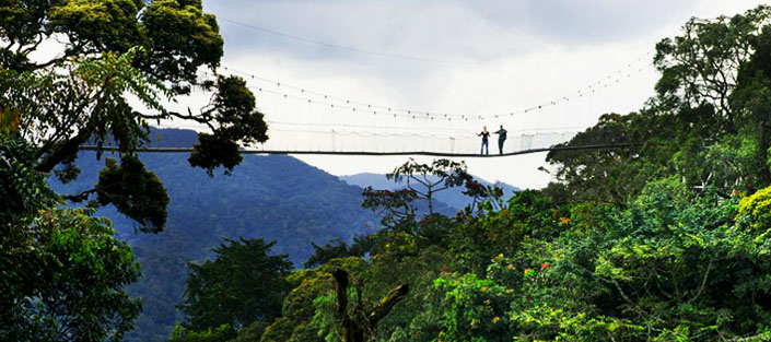 2 Days Nyungwe Tour with Canopy walk and Chimpanzee tracking