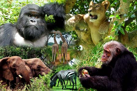 Animals of Uganda