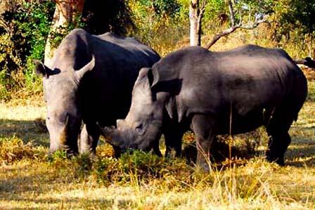 11 Days Best of Uganda - 8 Days Uganda tour, primates and wildlife safari - Top destinations
