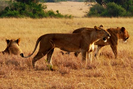 12 Days Uganda Wildlife - African adventure travellers