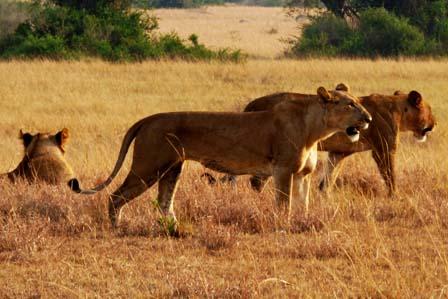 12 Days Uganda Wildlife - African adventure travellers