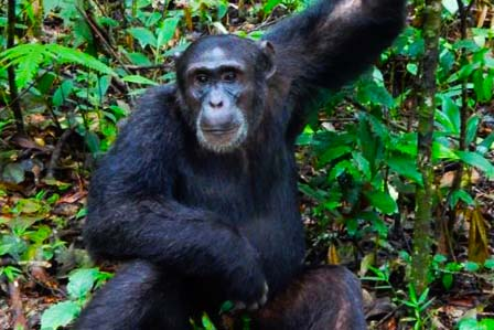 3 Days Kibale and Queen Elizabeth - African adventure travellers