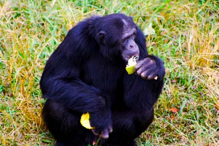 2 Days Kibale chimps - African adventure travellers