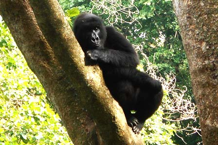 2 Days Gorillas Congo - African adventure travellers