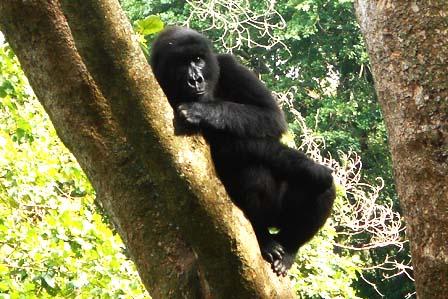 2 Days Gorillas Congo - African adventure travellers