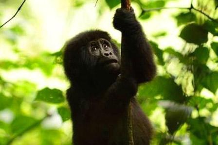 3 days gorilla and Lake Bunyonyi