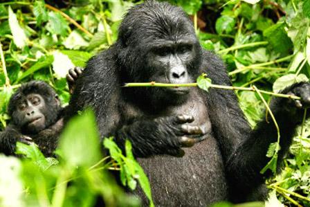 3 days gorilla Rwanda Safari