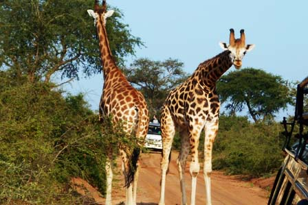 3 days murchison falls safari - african adventure travellers