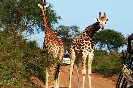 3 days murchison falls safari - african adventure travellers