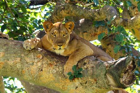 3 Days Queen Elizabeth - African adventure travellers