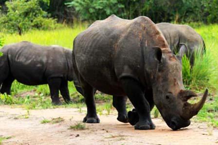 3 Days Murchison Falls and Rhino Tracking - 3 days Murchison falls safari