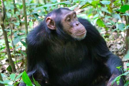 5 Days Gorillas and Chimpanzee tour - 2 Days Akagera National Park Safari for a great wildlife experience