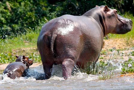 5 days Queen and Murchison - 3 days Murchison falls safari