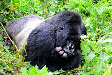 6 Days gorillas and rafting