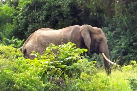 6 Days wildlife with gorilla trekking - 3 Days Gorilla tracking Bwindi forest and lake Bunyonyi safari