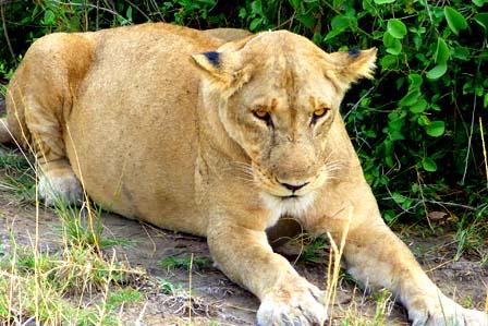 6 days Queen and Murchison Falls - 3 days Murchison falls safari