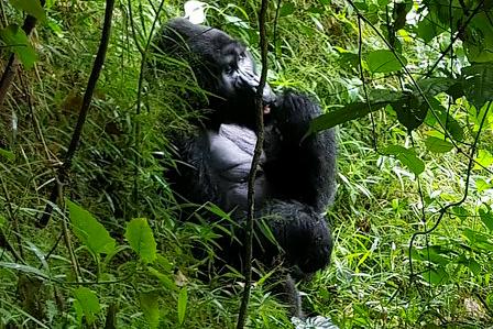 9 days gorillas & wildlife super luxury flying safari