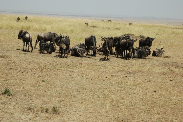 Kenya Attractions