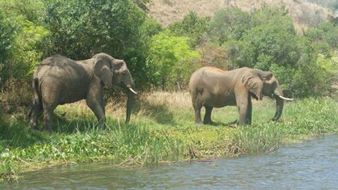 big five safaris uganda
