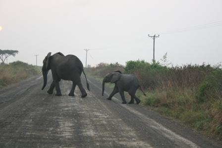 5 Days Lake Mburo and Queen Elizabeth safari - 1 day lake mburo national park tour