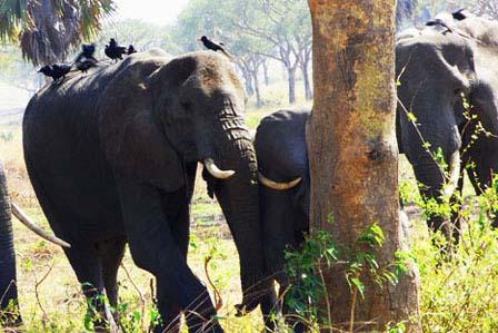 18 Days Uganda wildlife safari - 8 Days Uganda tour, primates and wildlife safari - Top destinations